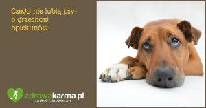 Czego nie lubią psy – 6 grzechów opiekunów