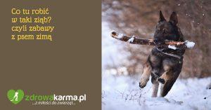 Zabawy z psem zimą czyli co tu robić w taki ziąb?