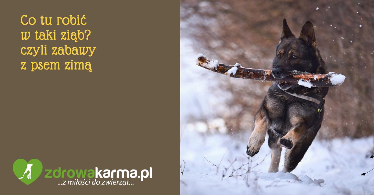 zabawy z psem zimą