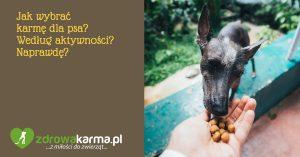 Jak wybrać karmę dla psa? Według aktywności? Naprawdę?