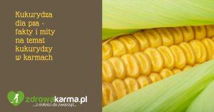 Fakty i mity na temat kukurydzy w karmach