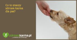 Co to znaczy zdrowa karma dla psa?