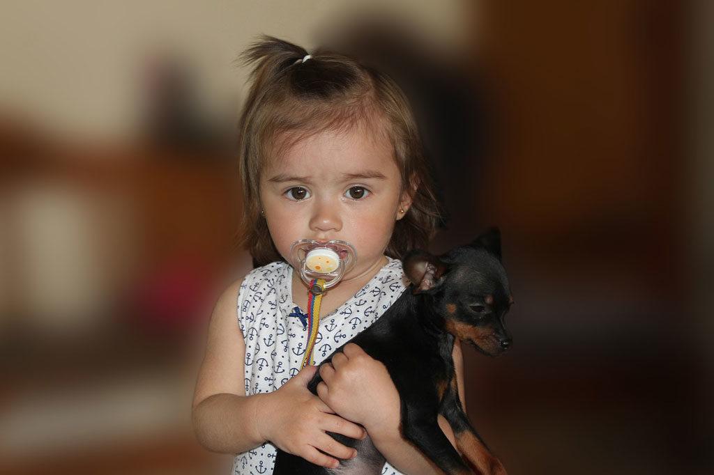 puppy 2370026 1280