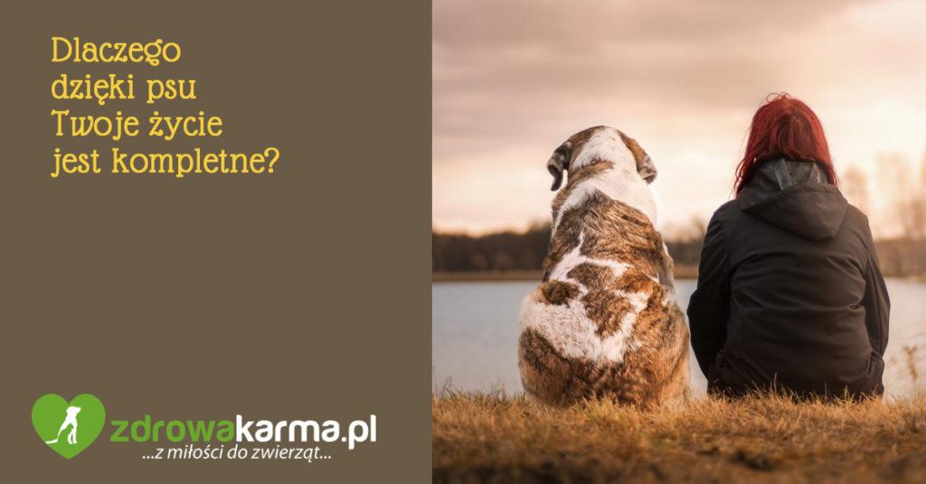 rola psa w życiu