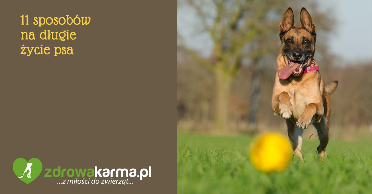 11 sposobów na długie życie psa