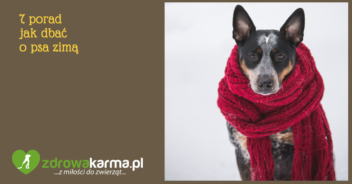 jak dbać o psa zimą