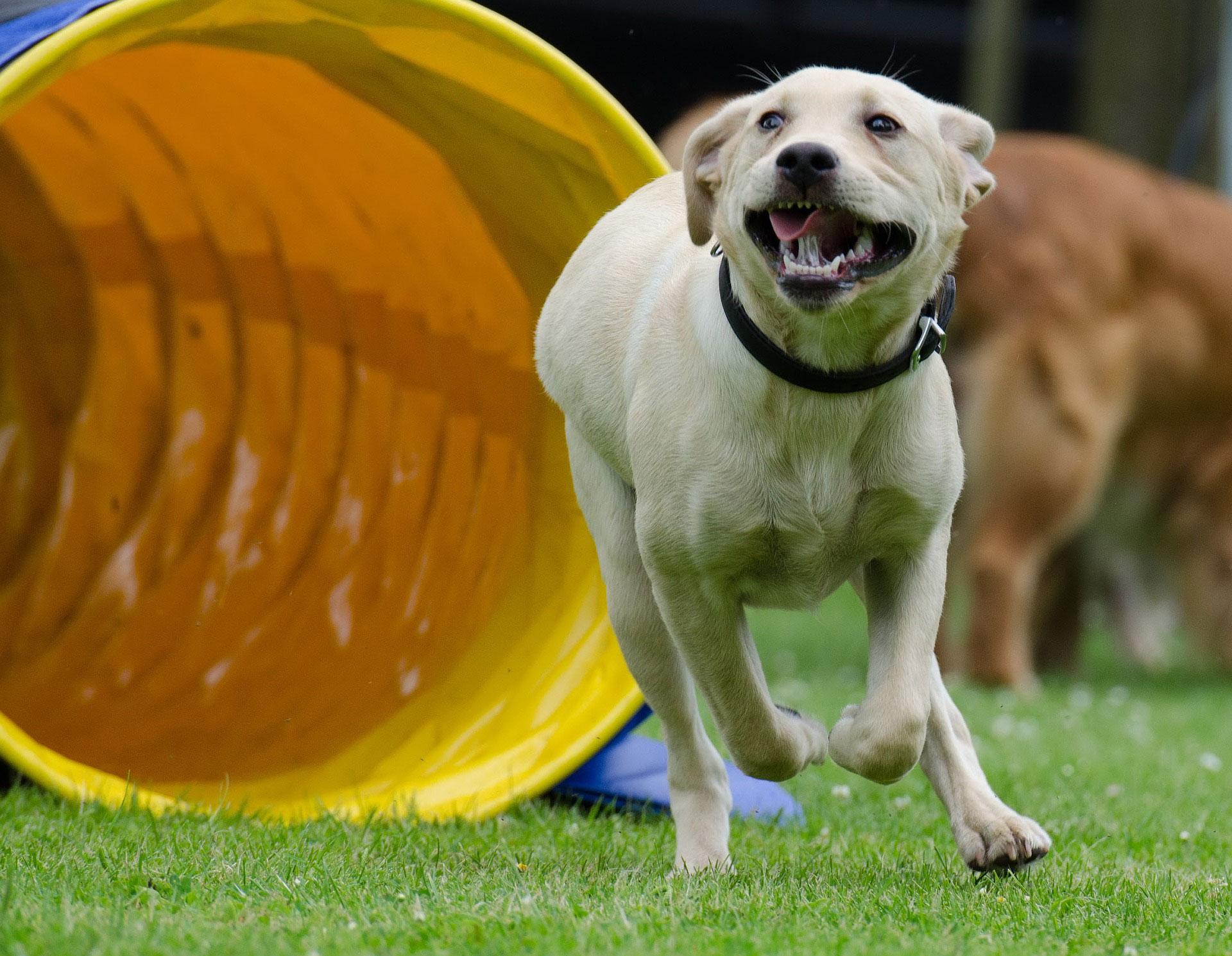 aktywny pies