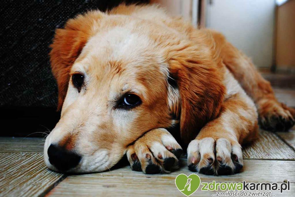 pies zjadł coś trującego