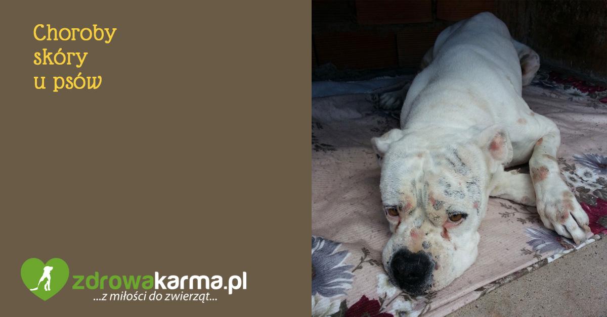 choroby skóry u psów