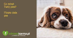 Co mówi Twój Pies – Mowa Ciała Psa