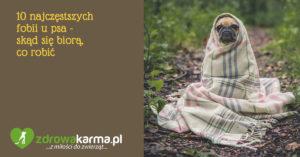 10 najczęstszych fobii u psa – psie lęki – skąd się biorą, co robić