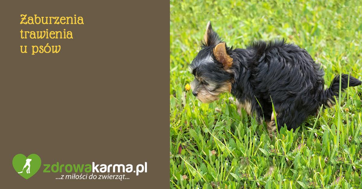 Zaburzenia trawienia u psów