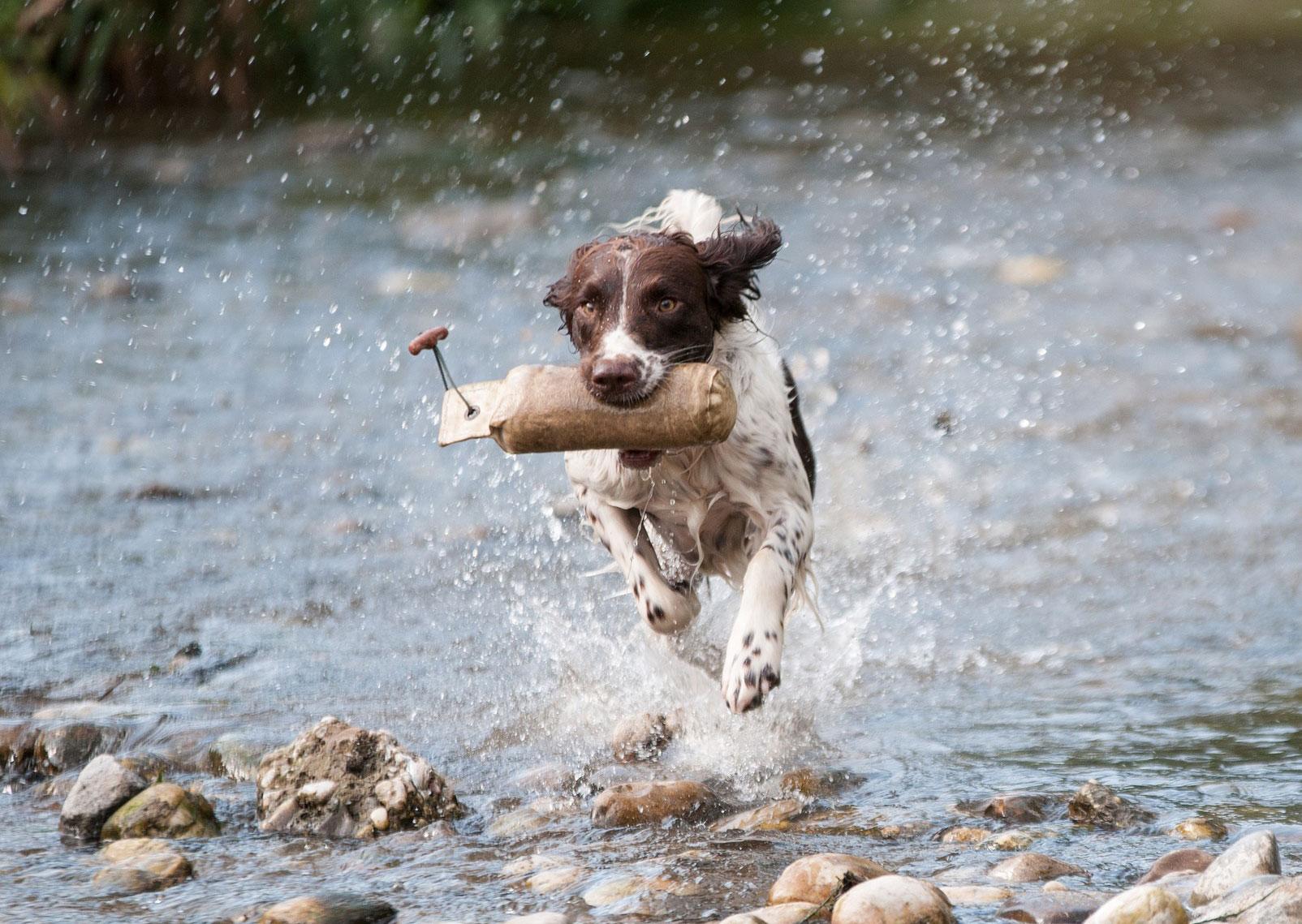 pies kochający aktywność