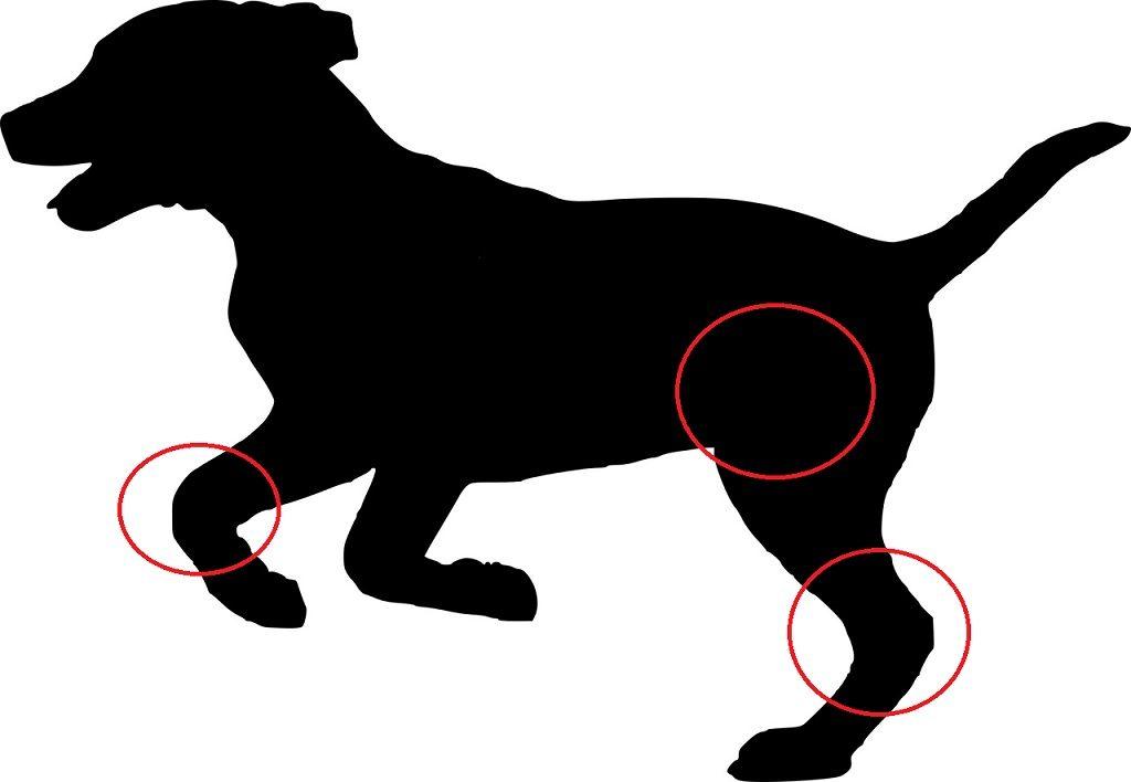 choroby stawów u psa - stawy łokciowe