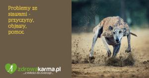 Problemy ze stawami u psów – przyczyny, objawy, pomoc