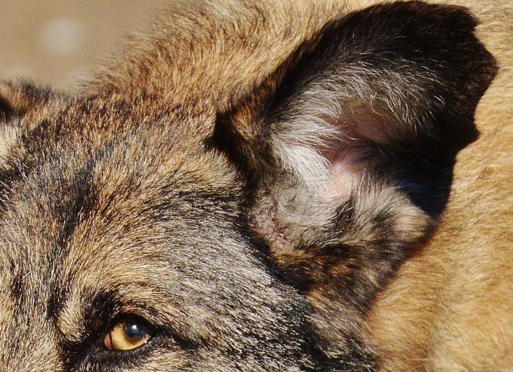 ucho psa