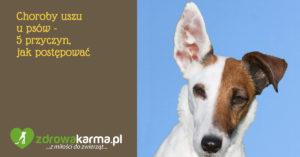 zdrowakarma.pl choroby uszu u psów