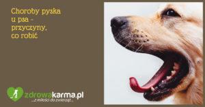 Choroby pyska u psa – przyczyny, co robić