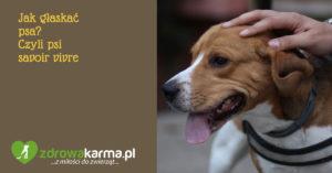 Jak głaskać psa? Czyli psi savoir vivre