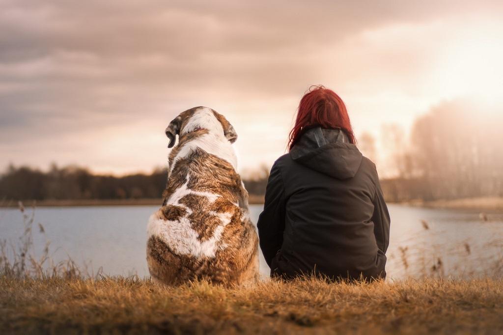 miłość psa