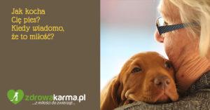 Jak kocha Cię pies? Miłość psa