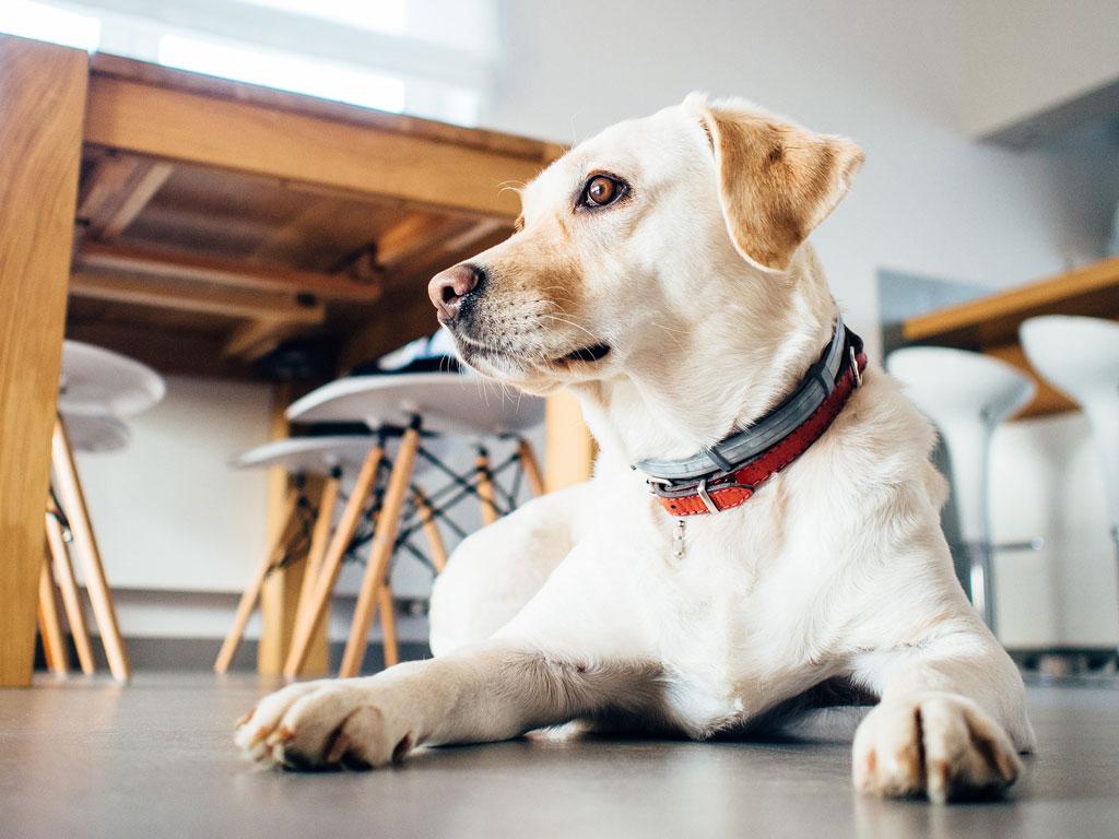 zanim kupisz psa - czy musisz mieć czysty dom?