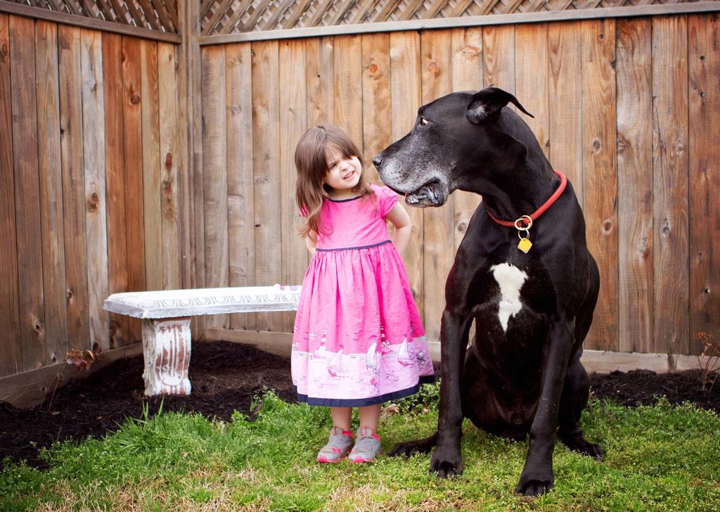 mały czy duży pies