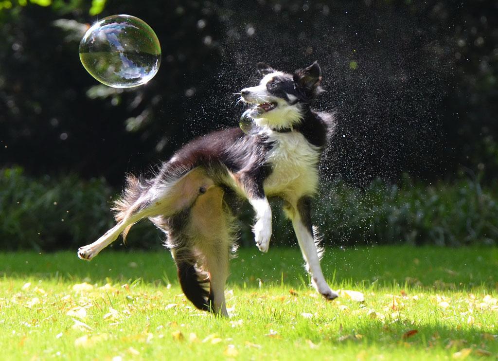 zanim kupisz psa - pies potrzebuje ruchu