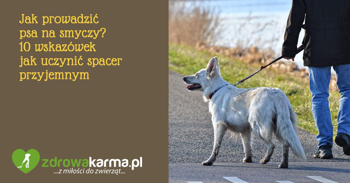 jak prowadzić psa na smyczy