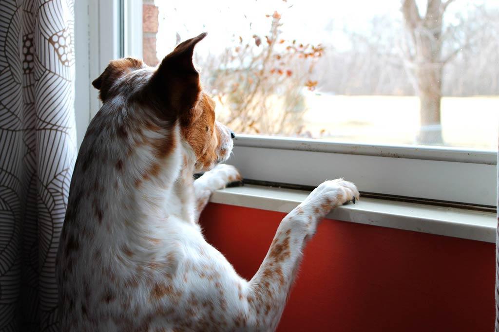 zanim kupisz psa - czy masz na niego czas?