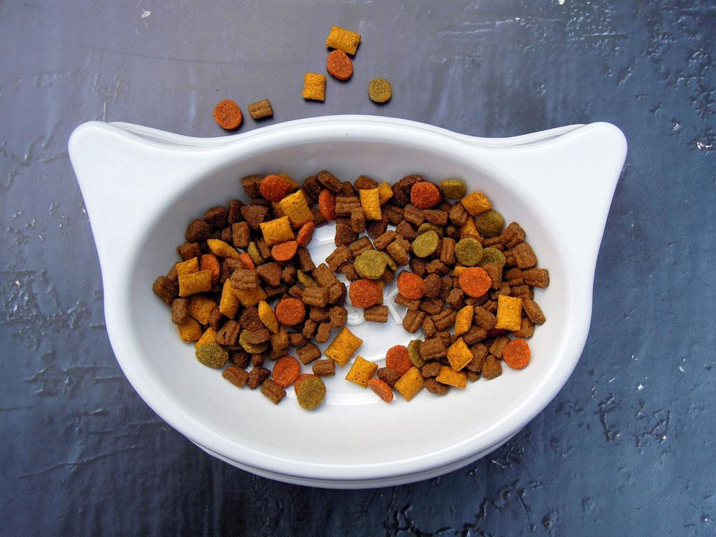 co jedzą małe koty