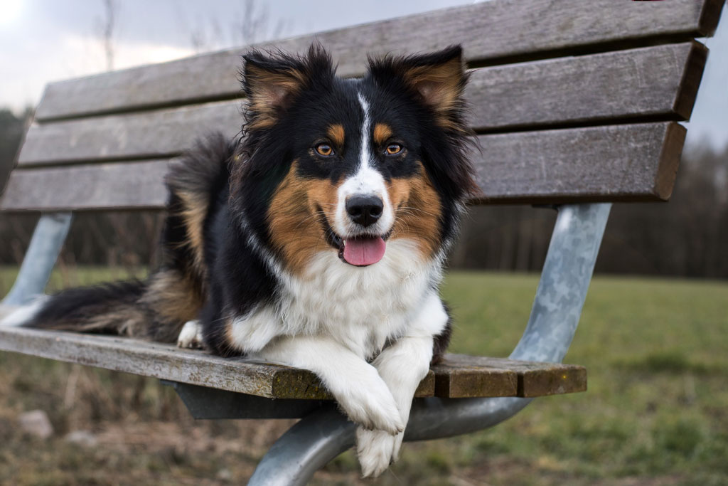 aloes dla psa