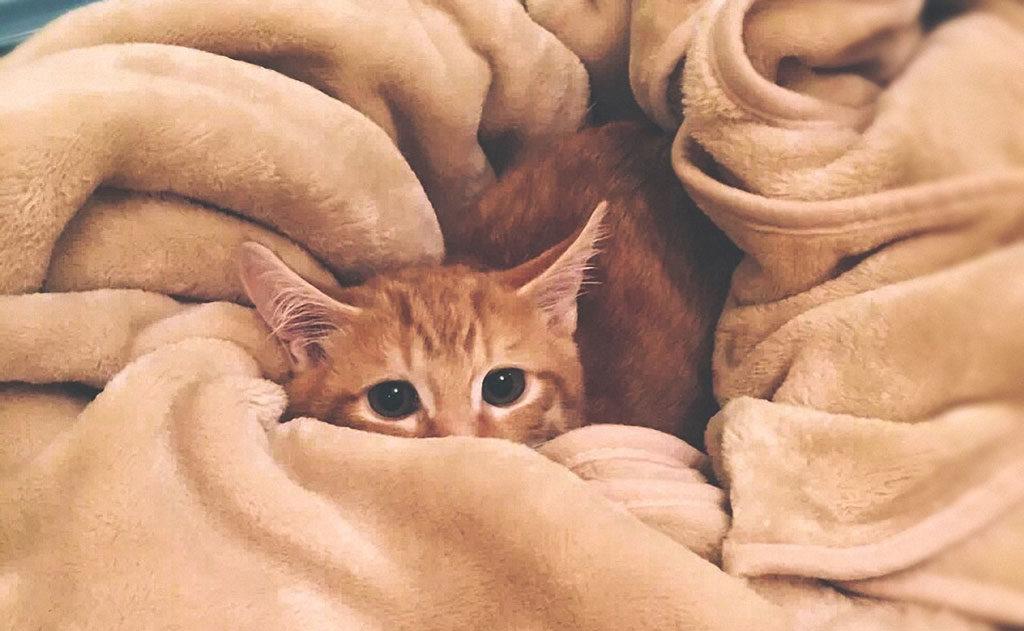 kot zwykle chowa się ze strachu