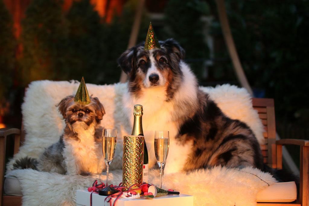 zwierzęta nie lubią świętować
