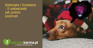 Zwierzęta i Sylwestra – 11 wskazówek jak pomóc pupilowi