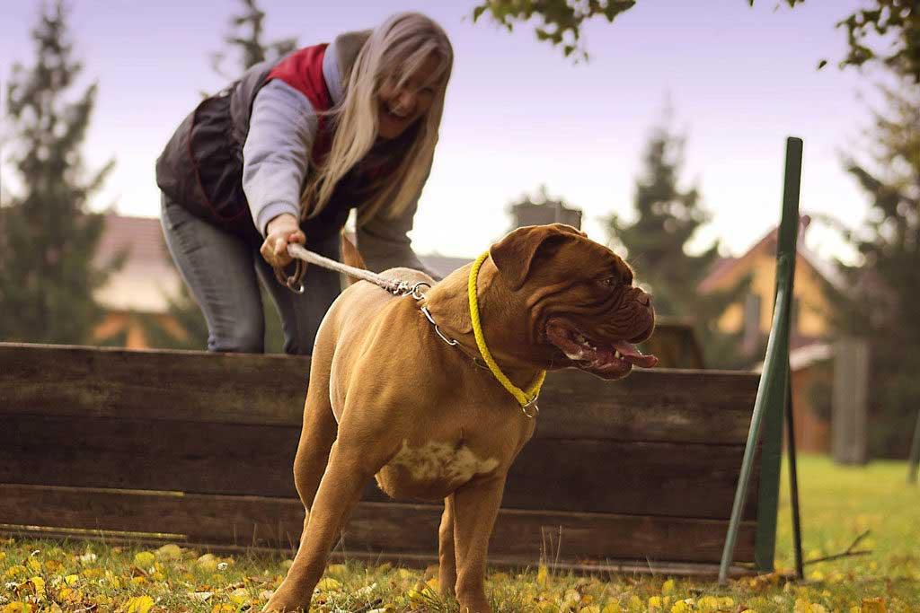 aktywność z psem