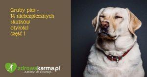 Gruby pies – 14 niebezpiecznych skutków otyłości