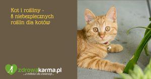 Kot i rośliny – 8 niebezpiecznych roślin dla kotów