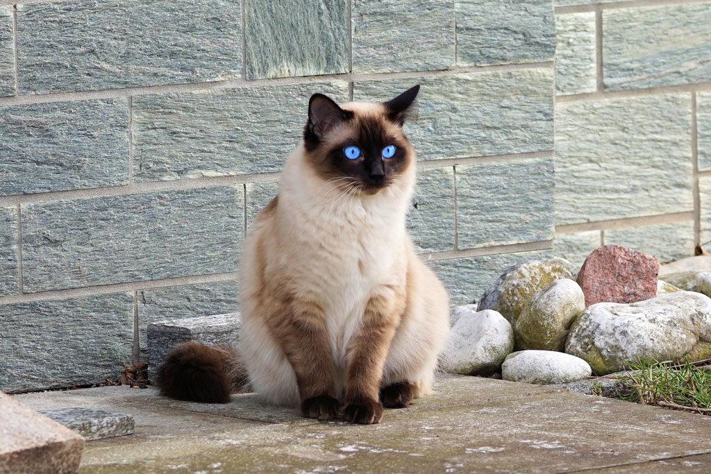 kot i rośliny - kot niewychodzący jest bezpieczniejszy