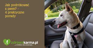Jak podróżować z psem? – 4 praktyczne porady