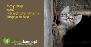 Kiedy wziąć kota? Dlaczego zbyt wczesna adopcja to błąd.
