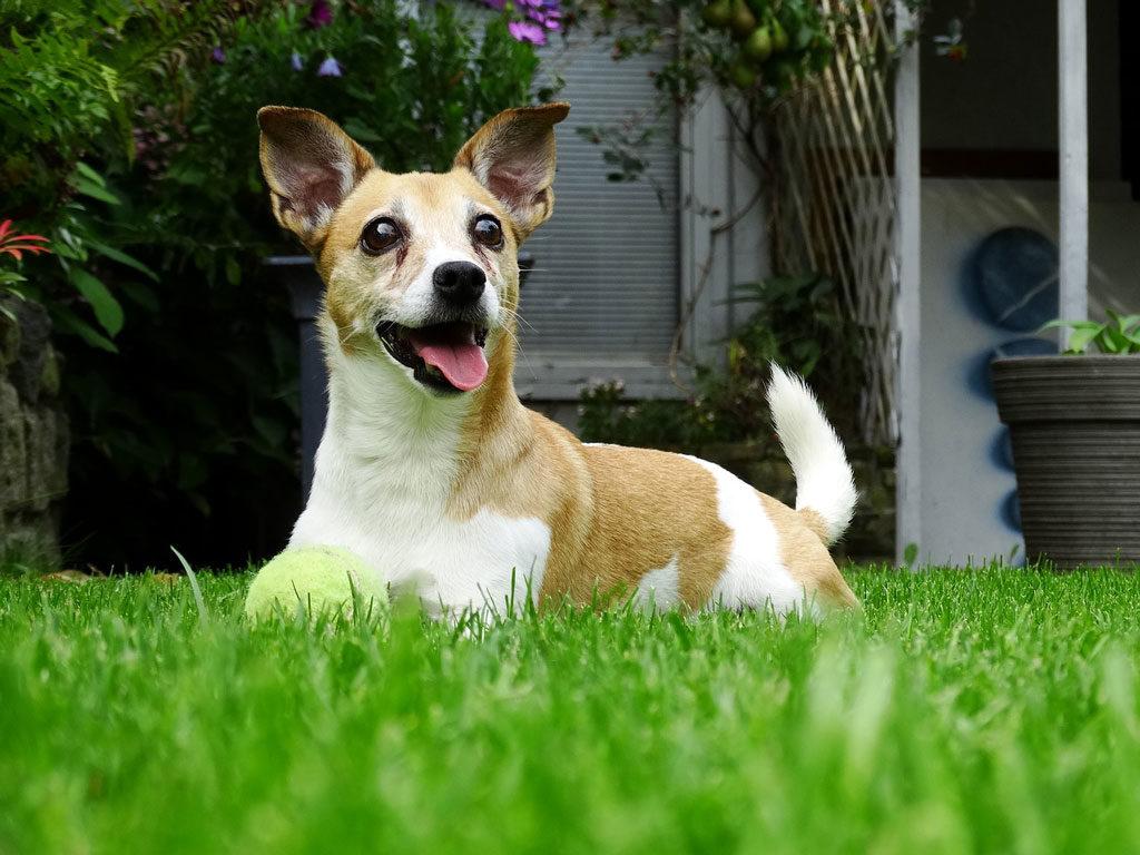 pies w trawie