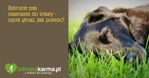 Pies zjadł nawóz do trawy – czym to grozi, jak pomóc?