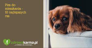 Pies do mieszkania – 10 najlepszych ras