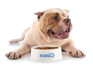 próbki karm dla psa Forza10