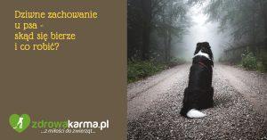 Dziwne zachowanie u psa – skąd się bierze i co robić?
