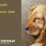 Choroby trzustki u psów – objawy, leczenie, dieta