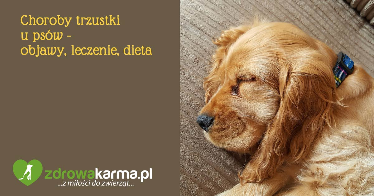 choroby trzustki u psa