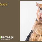 9 rzeczy, których nie wolno robić psu