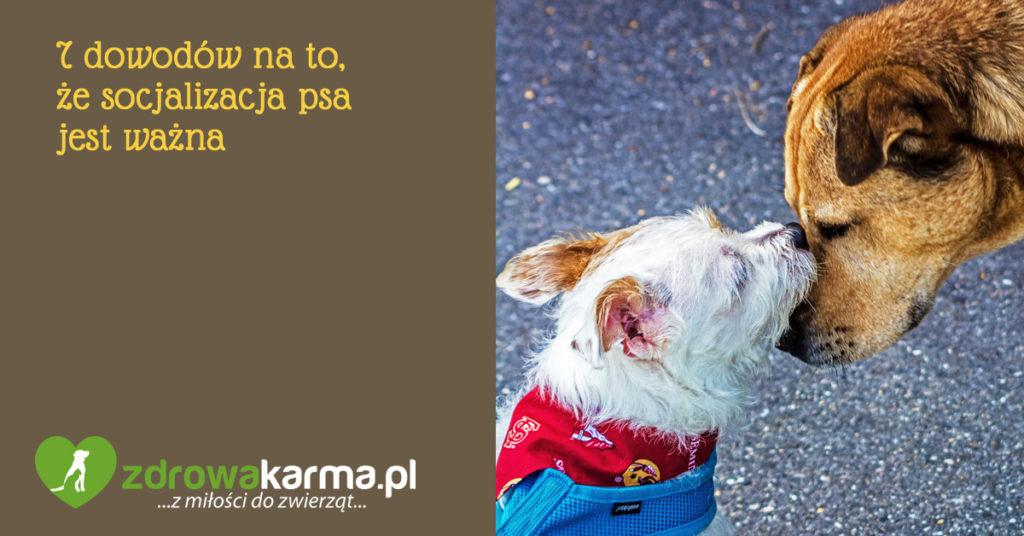 socjalizacja psa - 7 powodów